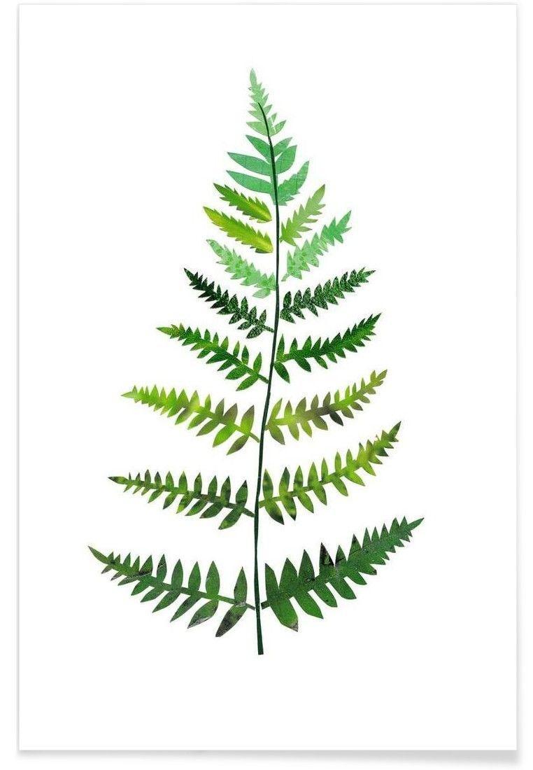 Farn Pflanze Zeichnen