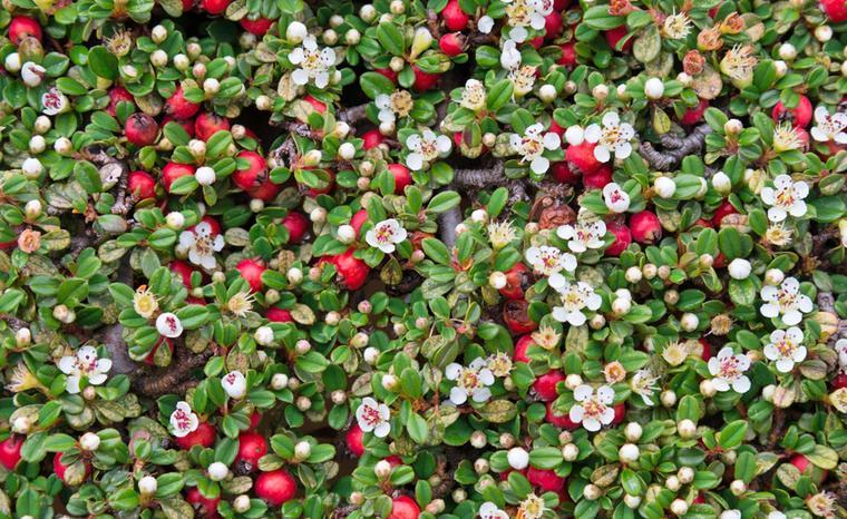 Ganzjährig Blühende Winterharte Pflanzen Balkon