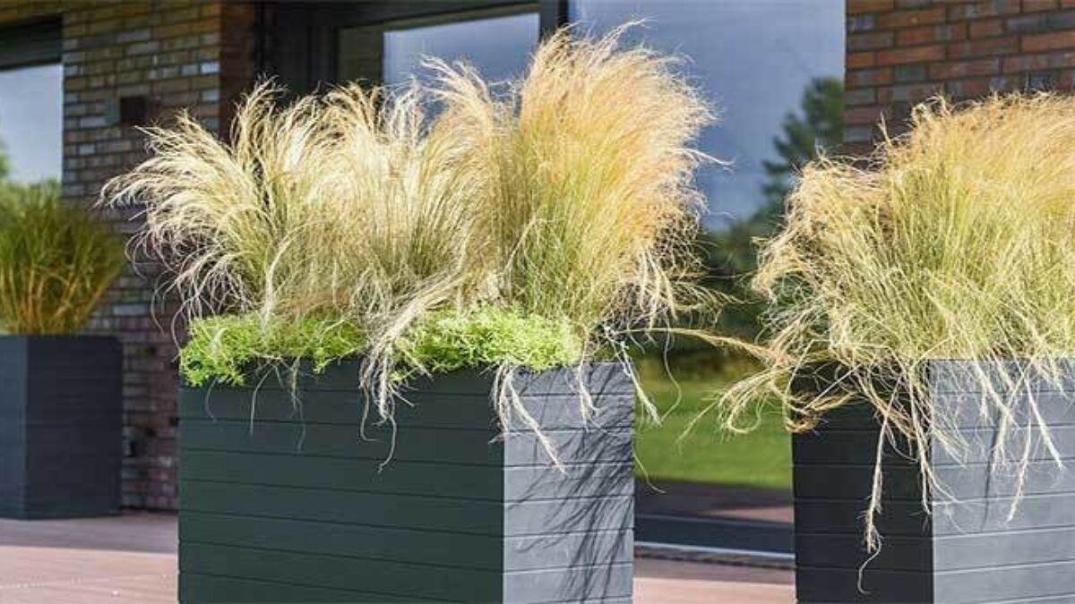Ganzjährig Blühende Winterharte Pflanzen Für Kübel