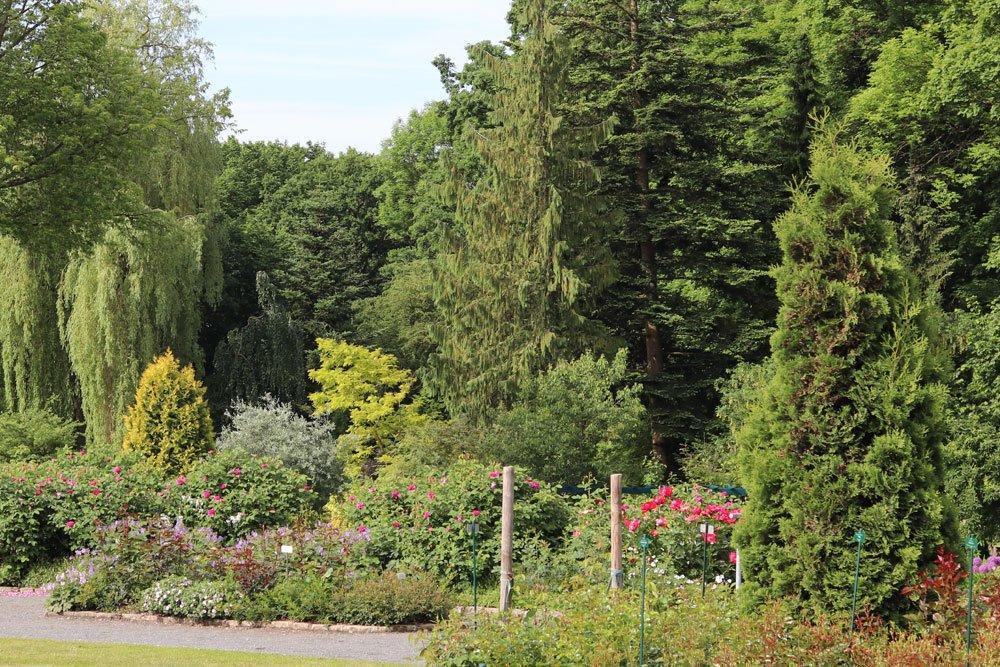 Garten Bäume Arten