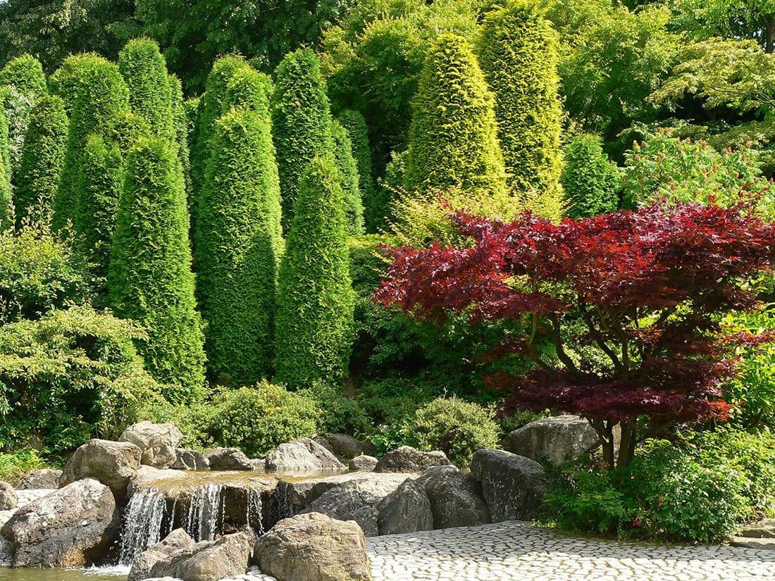Garten Bäume Sichtschutz