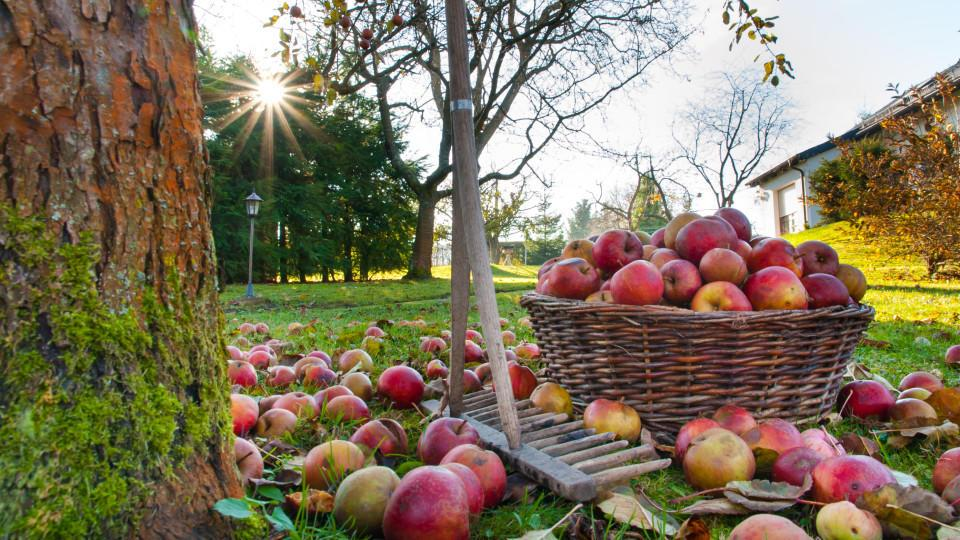 Garten Im Herbst Bilder
