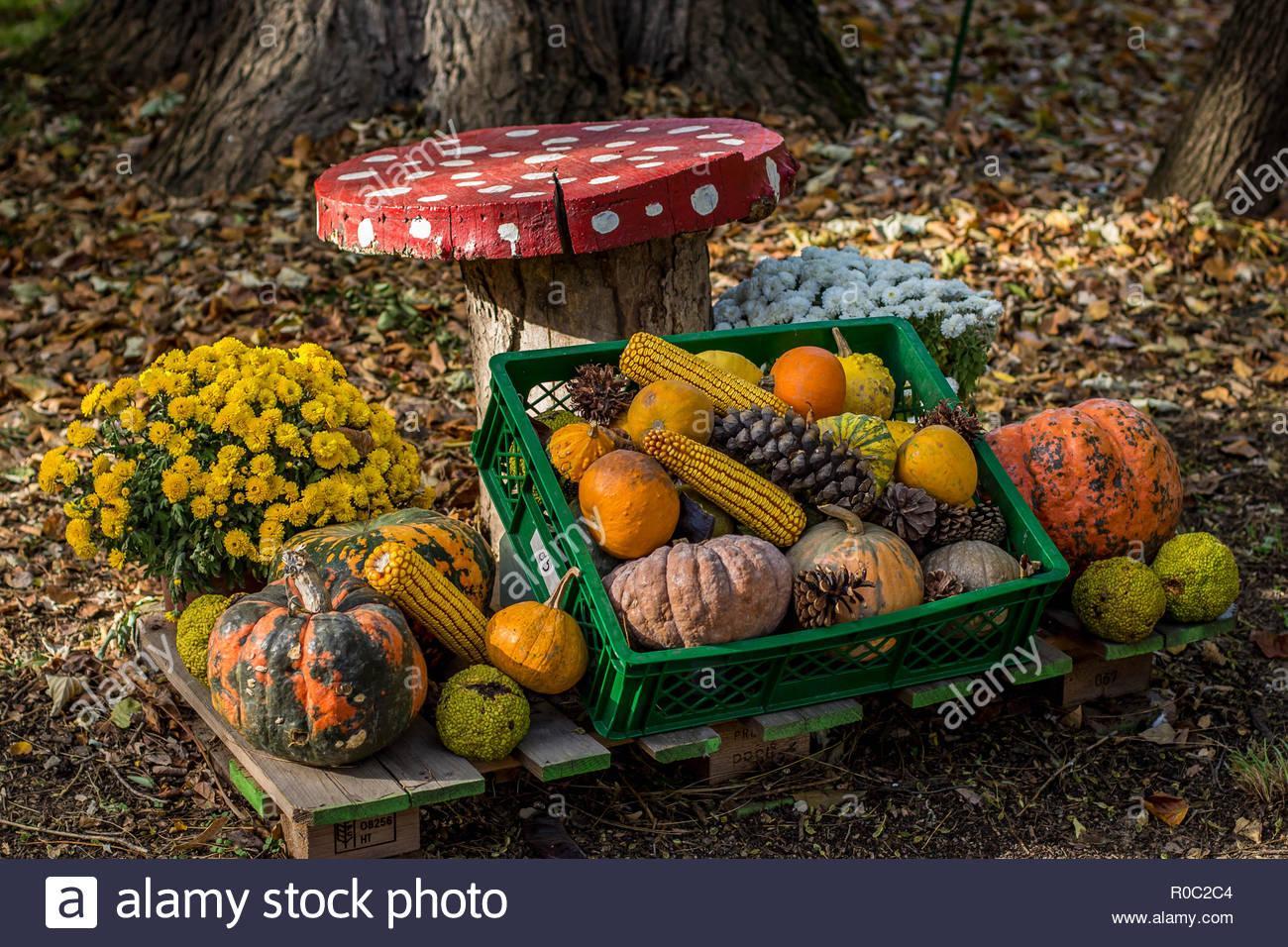 Garten Im Herbst Dekorieren