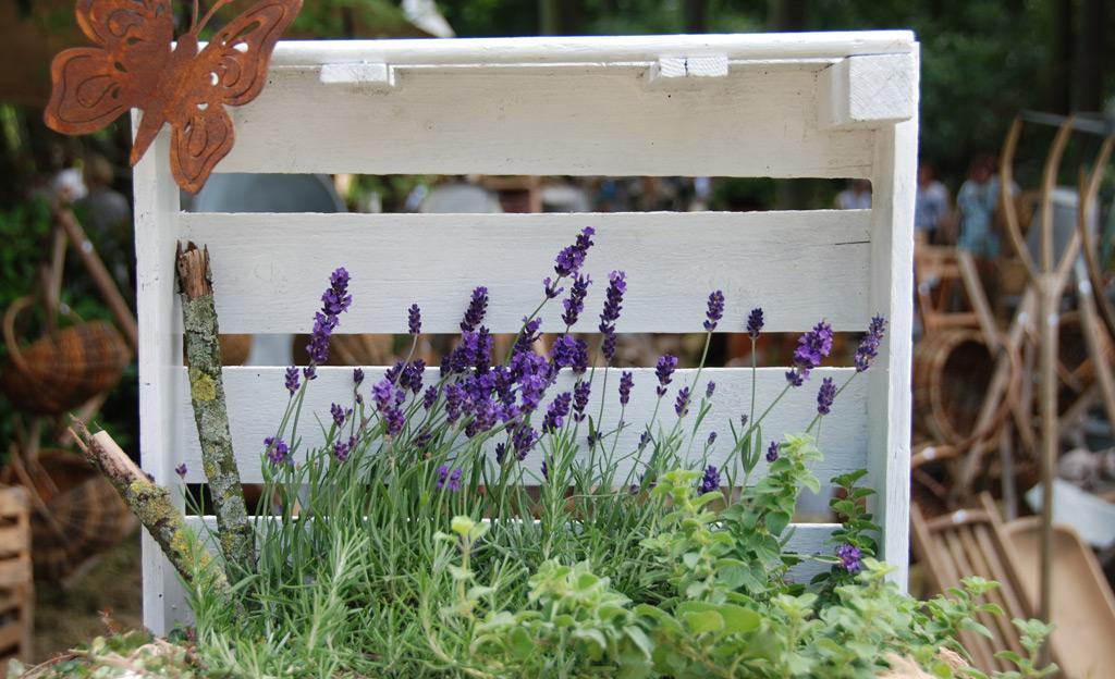 Garten Lavendel Im Kübel
