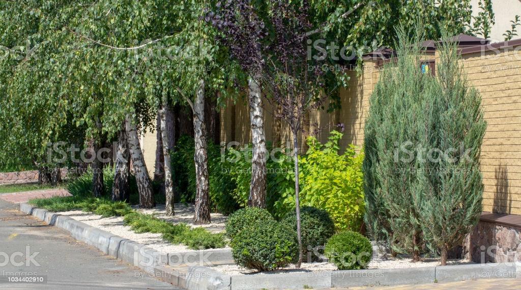 Garten Pflanzen Modern