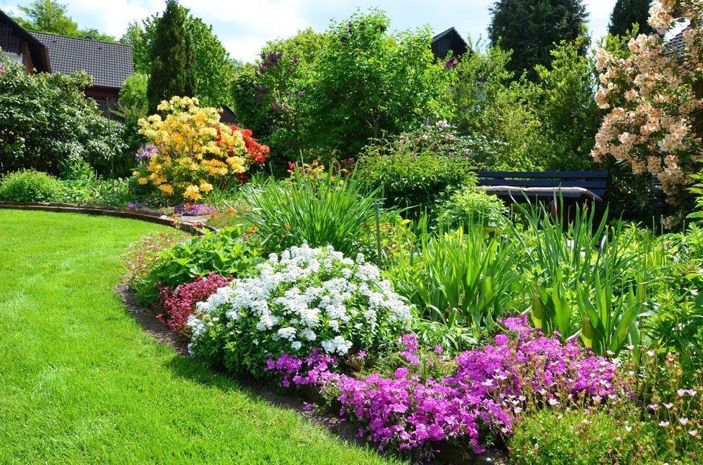 Garten Sträucher Weiße Blüten