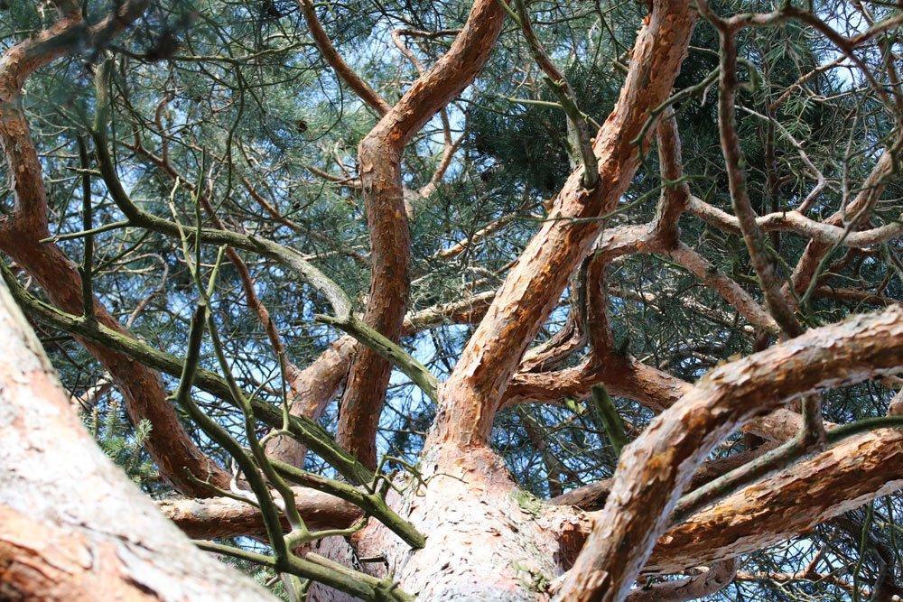 Gartenbäume Bis 10 M