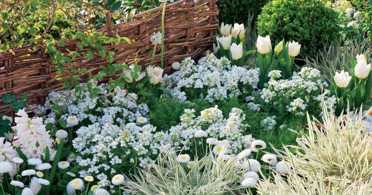Gartenblumen Weiße Blüten