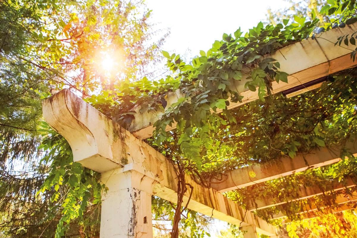 Gartengestaltung Baum Für Garten Schattenspender