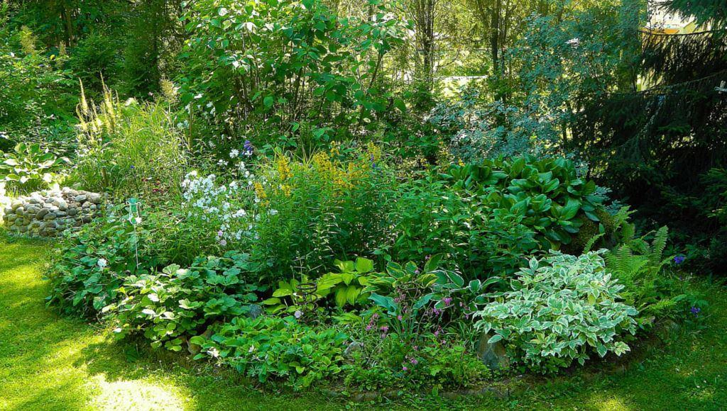 Gartengestaltung Immergrüne Bäume Für Kleine Gärten