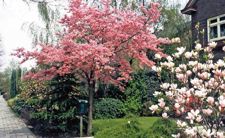 Gartengestaltung Kleine Bäume Für Den Garten