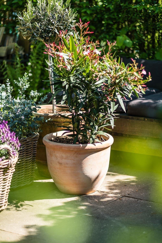 Gartengestaltung Winterharte Mediterrane Mediterrane Pflanzen