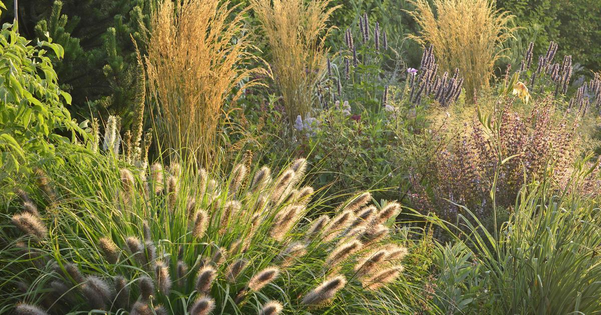 Gartengräser Winterhart Bilder