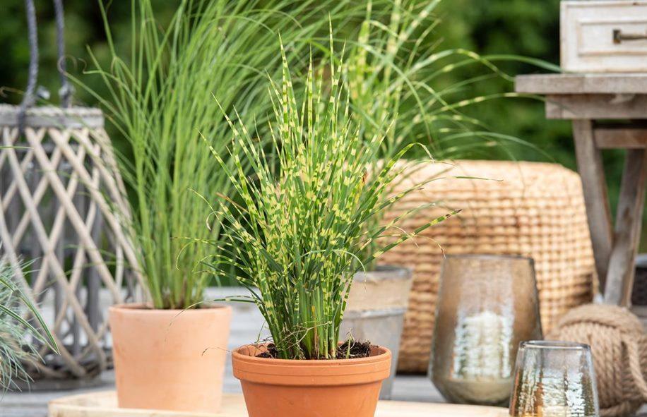 Gartenpflanzen Online Bestellen
