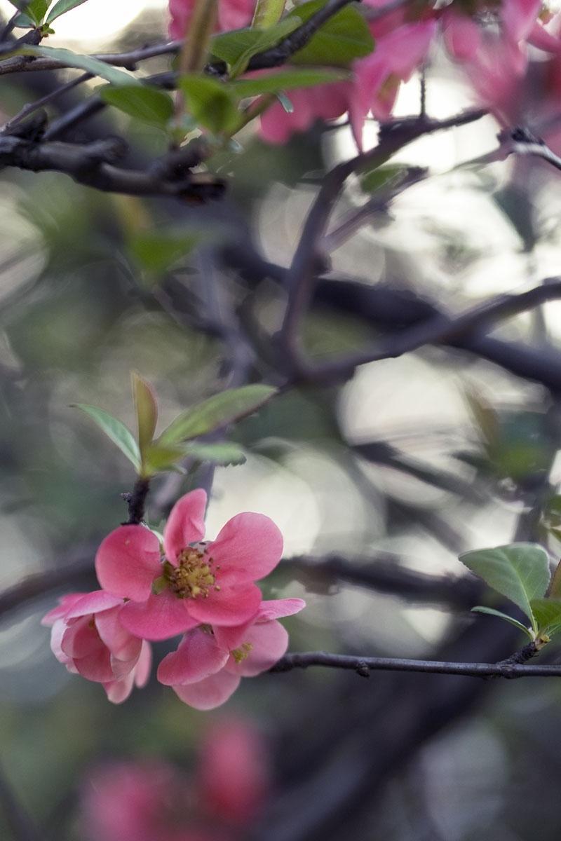 Gartensträucher Blühend Winterhart