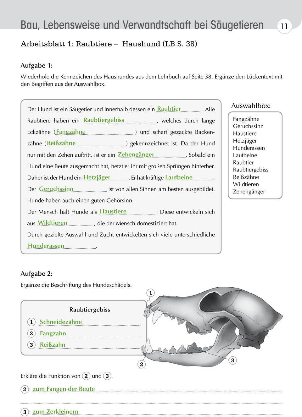 Gebisstypen Gebiss Pflanzenfresser Fleischfresser Allesfresser Arbeitsblatt