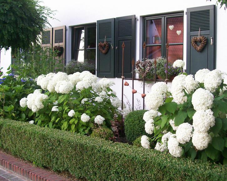 Gestaltung Vorgarten Sonnig