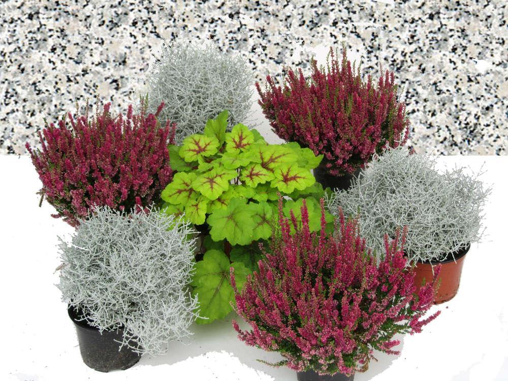 Grabbepflanzung Pflanzen Herbst Winterhart
