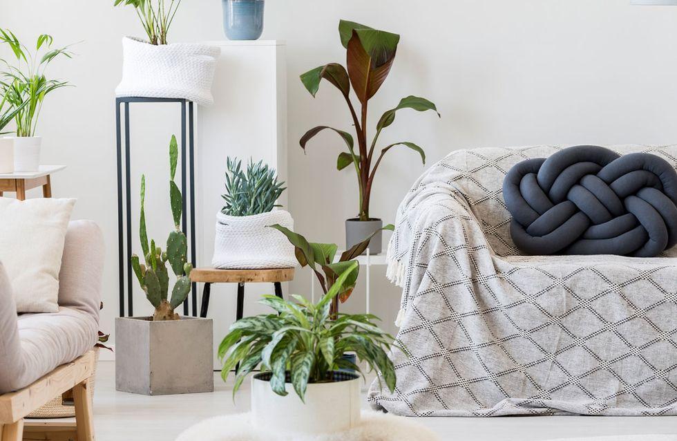 Große Grünpflanzen Für Wohnzimmer