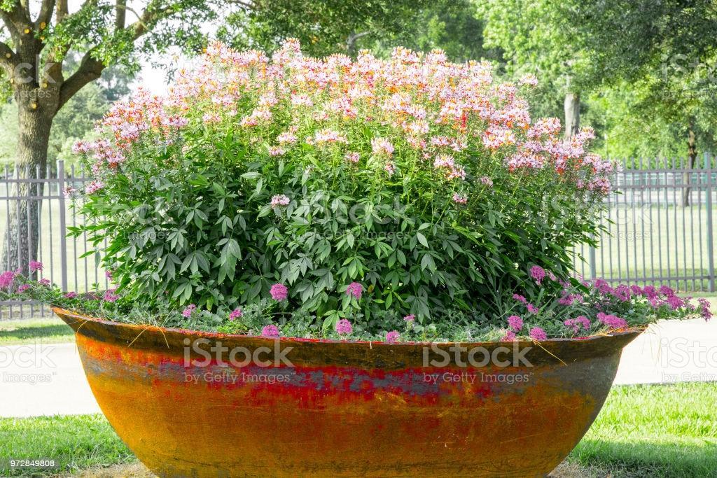 Große Pflanzen Für Garten