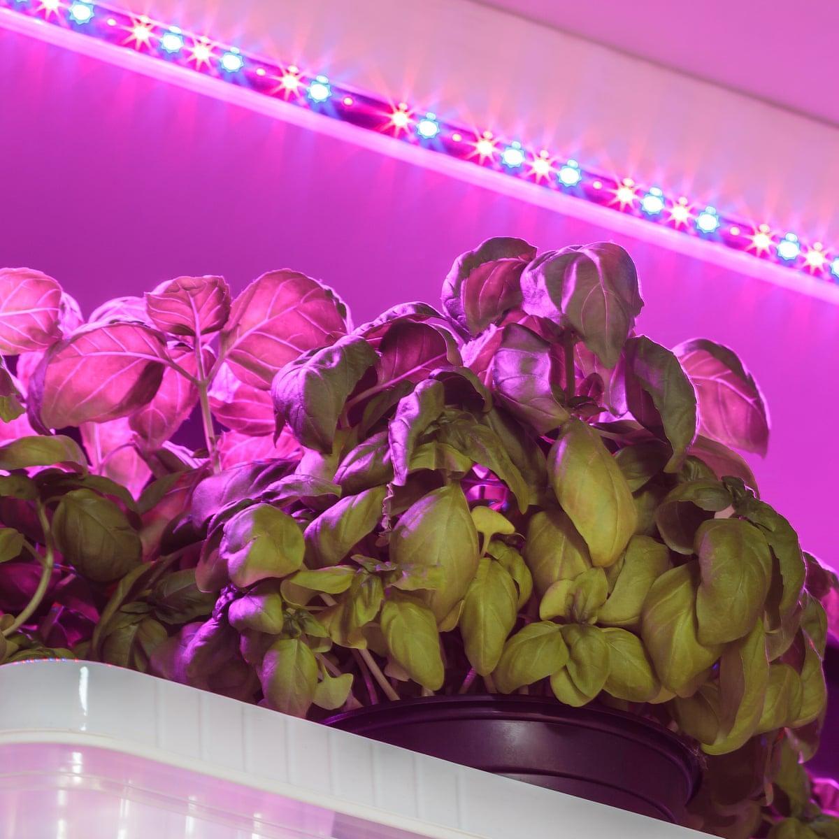 Grow Lampen Led