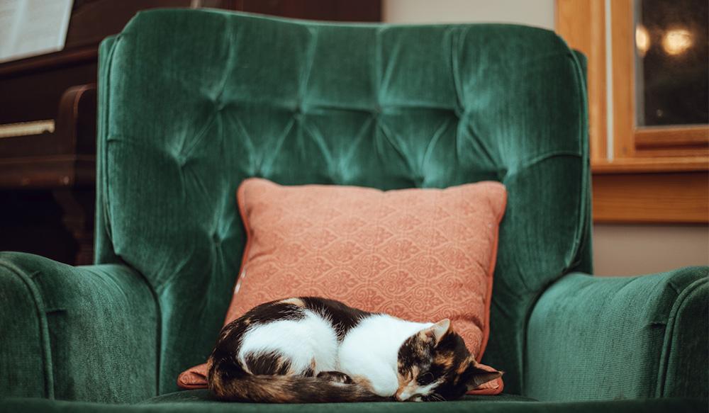 Grüne Couch Welche Wandfarbe