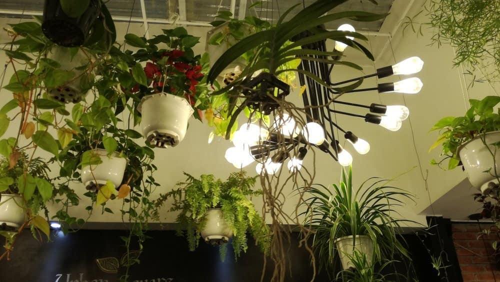 Grünes Wohnzimmer Pflanzen