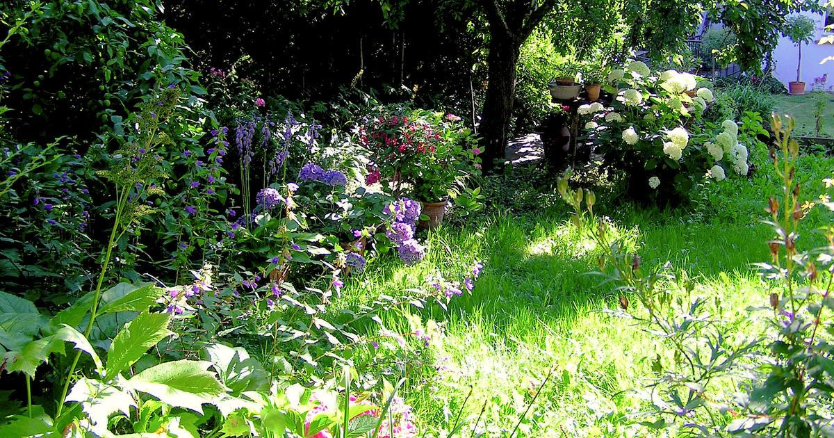 Halbschatten Pflanzen Winterhart