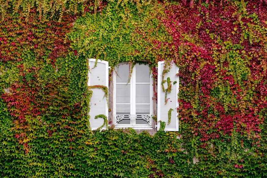 Hängende Pflanzen Garten Winterhart