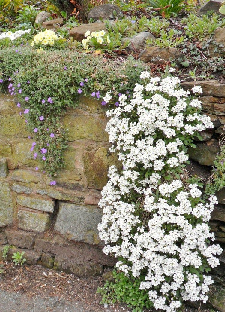 Hängepflanzen Garten Winterhart