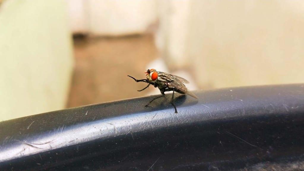 Hausmittel Gegen Fliegen Im Garten