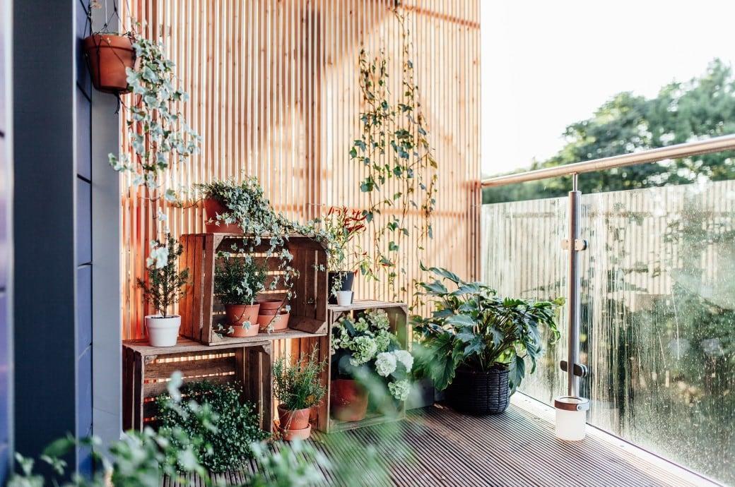Hoher Bambus Als Sichtschutz