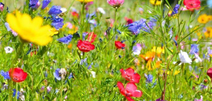 Ideen Gartengestaltung Bilder