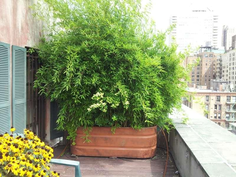 Ideen Sichtschutz Pflanzen Balkon