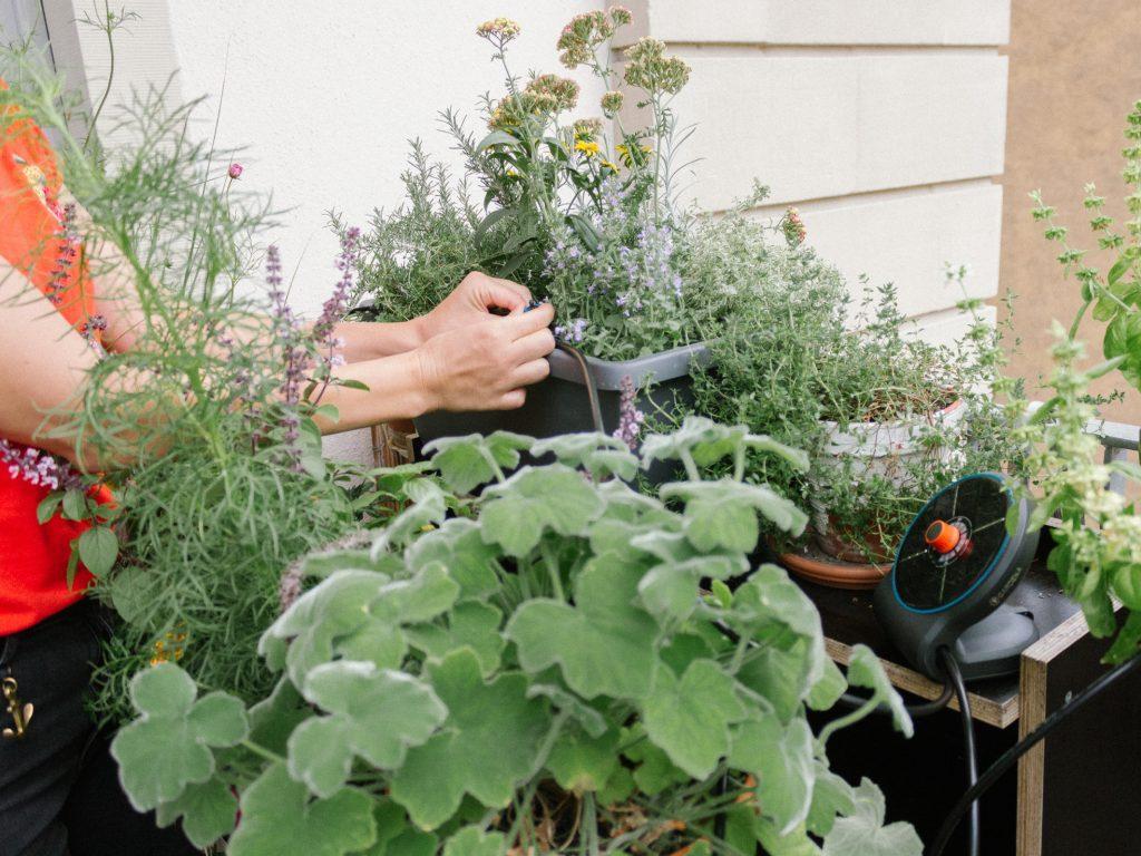 Indoor Garten Garten In Der Wohnung