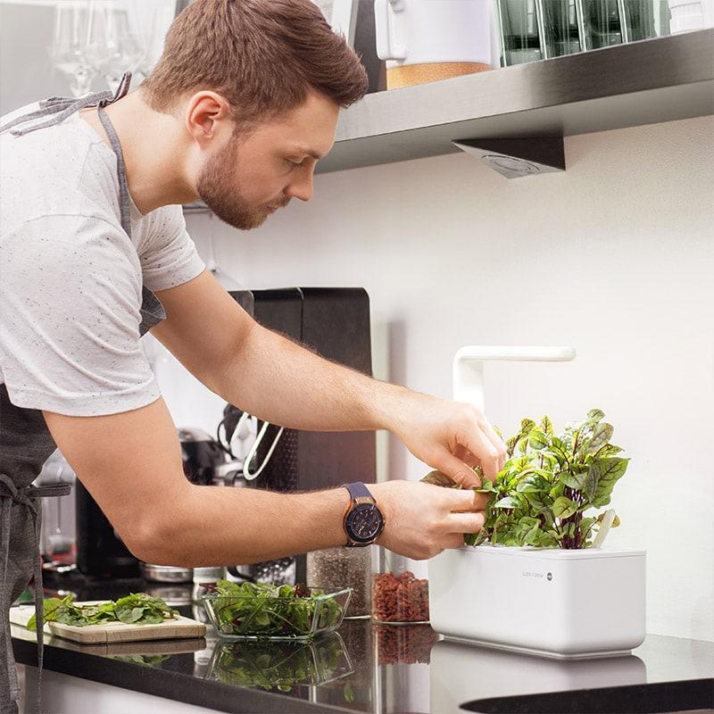 Indoor Garten Küche