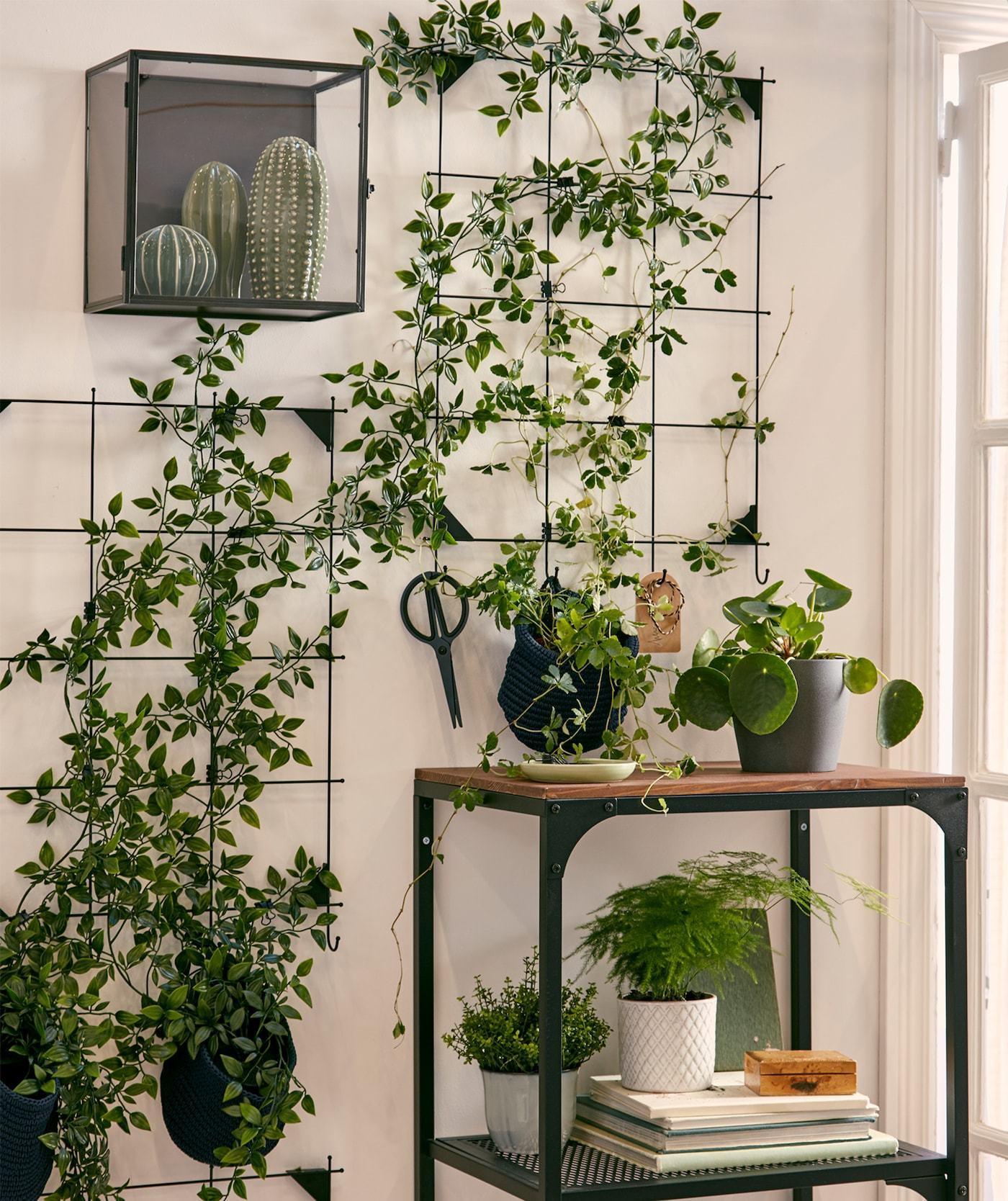 Indoor Garten Wand