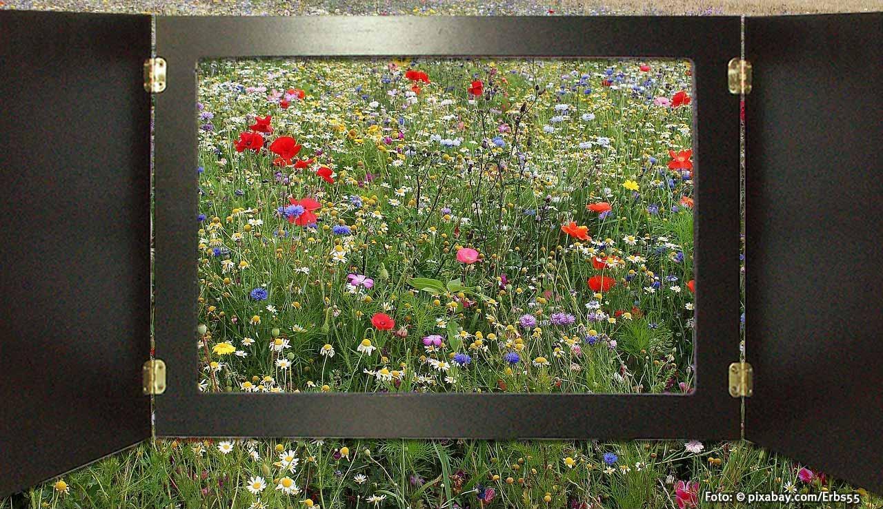 Insektenfreundlicher Garten Gestalten