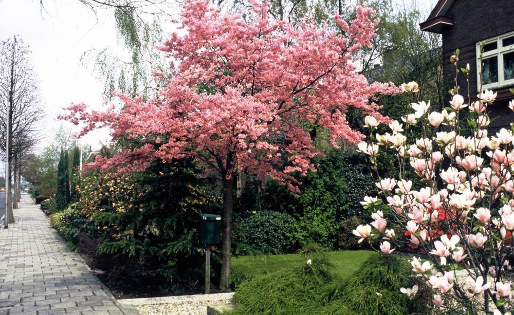 Kleiner Baum Vorgarten Immergrün
