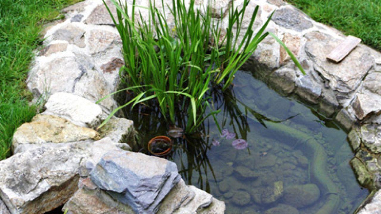 Kleiner Gartenteich Anlegen Mit Pumpe