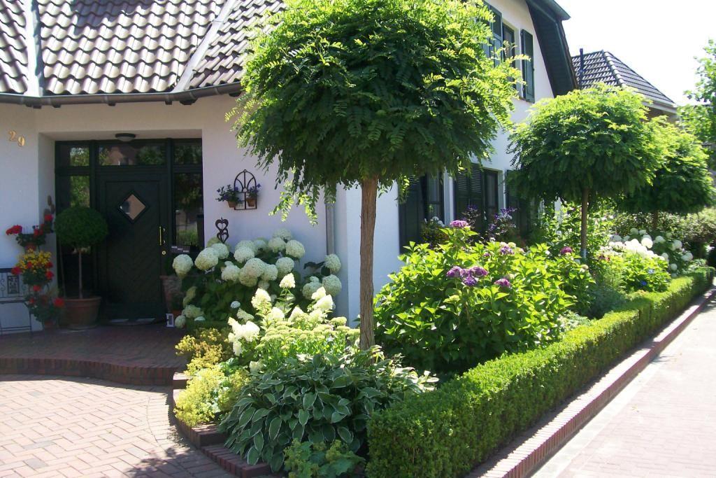 Kleiner Kugelbaum Immergrün