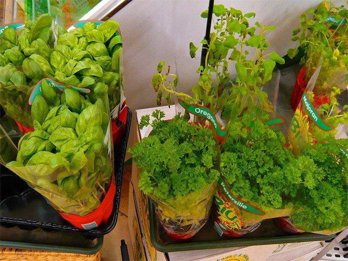 Kräuter Pflanzen Bilder