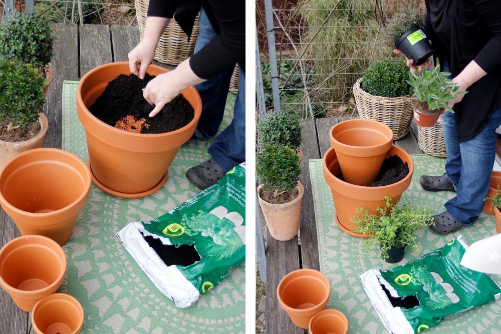 Kräuter Pflanzen Ideen