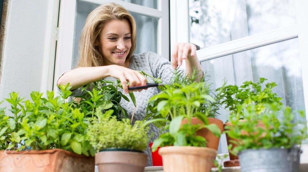 Kräuter Pflanzen Topf