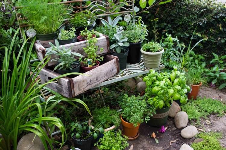 Kräutergarten Anlegen Kräuterbeet Ideen