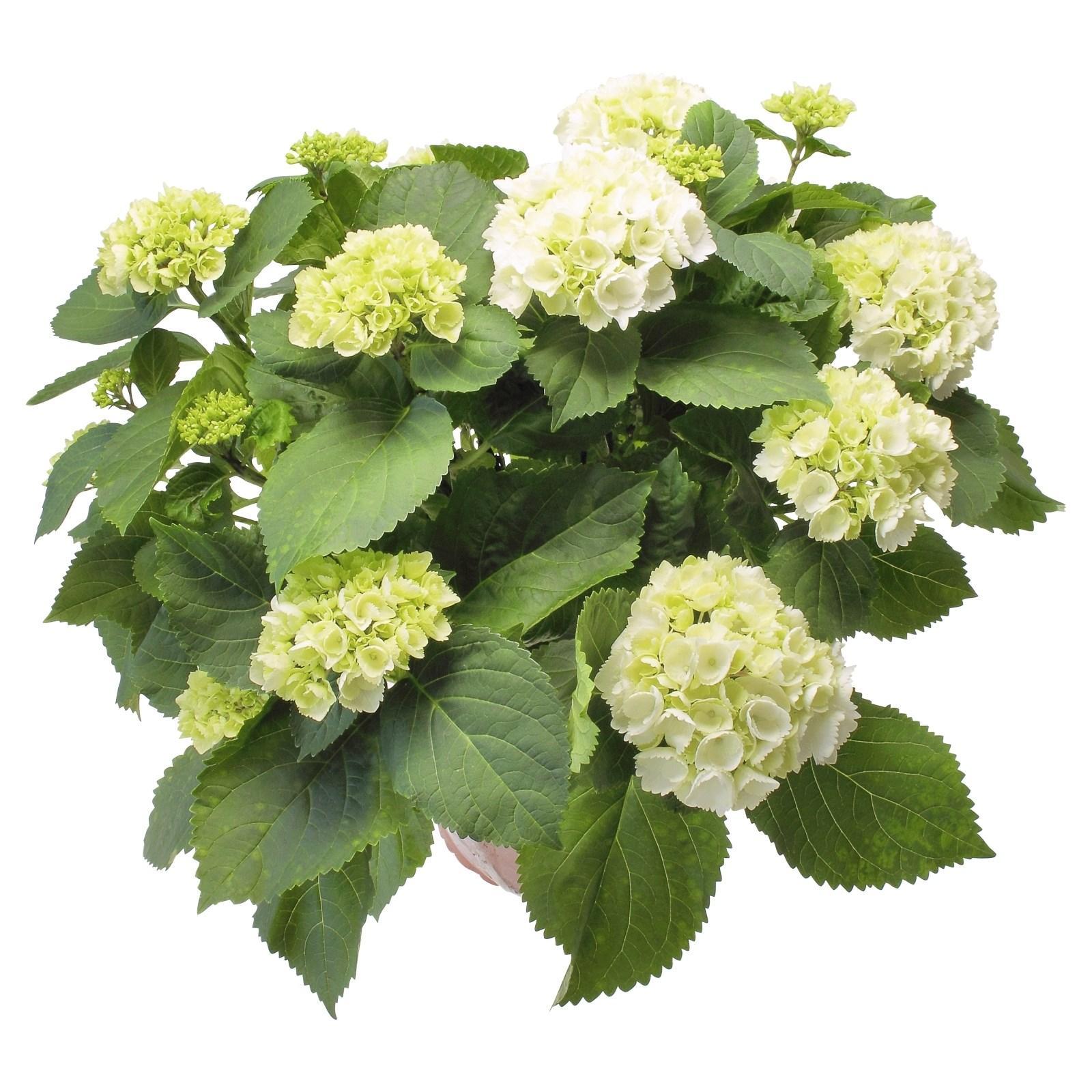 Landi Mehrjährige Pflanzen