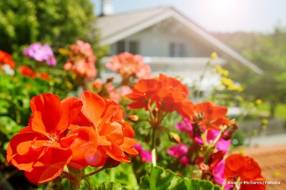 Mehrjährige Pflanzen Volle Sonne
