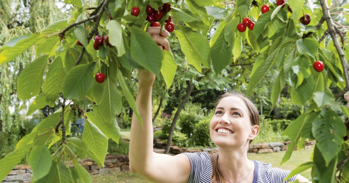 Mini Obstbäume Für Den Garten