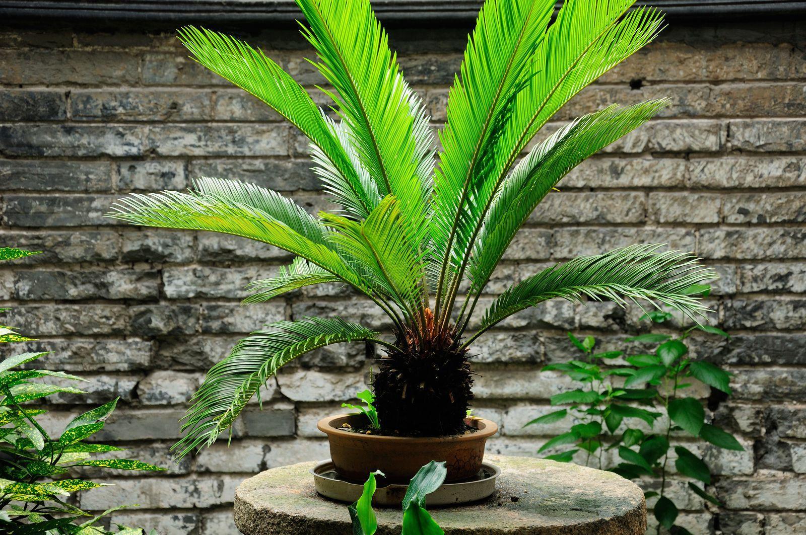 Palmen Für Den Garten Winterhart
