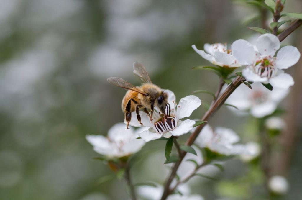 Pflanze Winterhart Bienenfreundliche Stauden